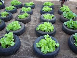 horta de pneu