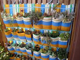 sapateira horta